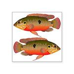 African Jewelfish Sticker