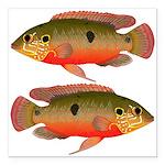 African Jewelfish Square Car Magnet 3