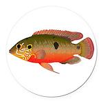 African Jewelfish Round Car Magnet