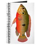 African Jewelfish Journal