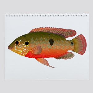 African Tropical Fishes I Wall Calendar