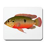 African Jewelfish Mousepad