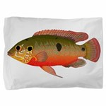 African Jewelfish Pillow Sham