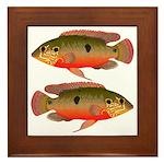 African Jewelfish Framed Tile