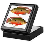 African Jewelfish Keepsake Box