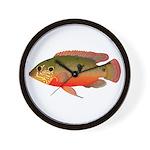 African Jewelfish Wall Clock