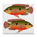 African Jewelfish Tile Coaster