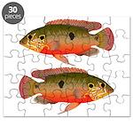 African Jewelfish Puzzle