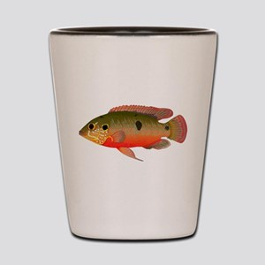 African Jewelfish Shot Glass