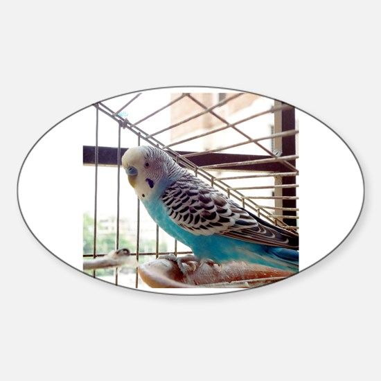 Unique Blue budgie Sticker (Oval)