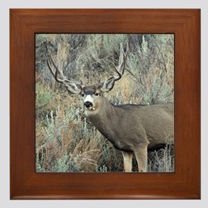 Utah mule deer buck Framed Tile