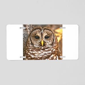 Barred Owl Aluminum License Plate