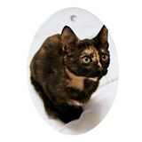 Calico cat Oval Ornaments