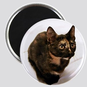 Tortie Magnets
