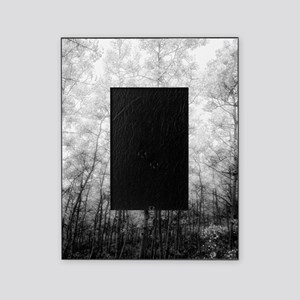 Black and White Aspens Picture Frame