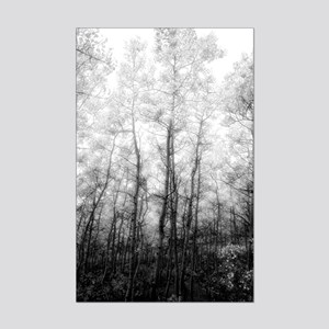 Black and White Aspens Posters