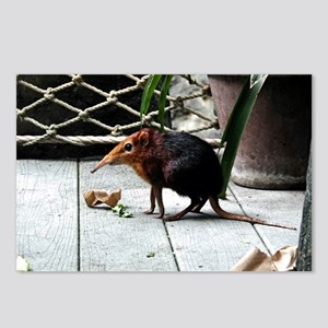 Black and Rufous Elephant Shrew Postcards (Package
