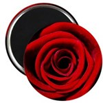 Red Rose Magnets