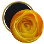 Yellow Rose Magnets