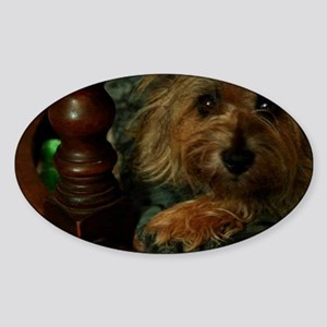 Cairn Terrier Sticker