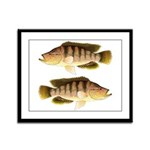 Thinface Cichlid Framed Panel Print