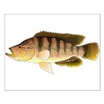 Thinface Cichlid Posters