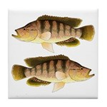Thinface Cichlid Tile Coaster
