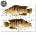 Thinface Cichlid Puzzle