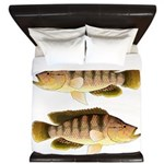 Thinface Cichlid King Duvet