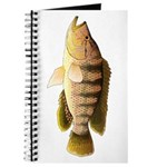 Thinface Cichlid Journal