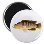 Thinface Cichlid Magnets