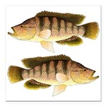 Thinface Cichlid Square Car Magnet 3