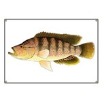 Thinface Cichlid Banner