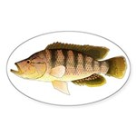 Thinface Cichlid Sticker
