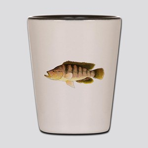 Thinface Cichlid Shot Glass