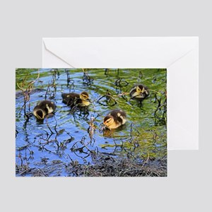 Bunch Of Baby Ducks Greeting Cards