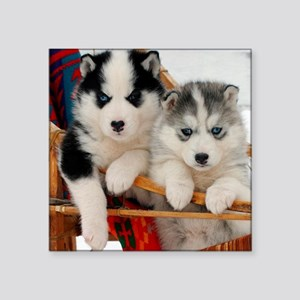 Two Husky puppies Sticker