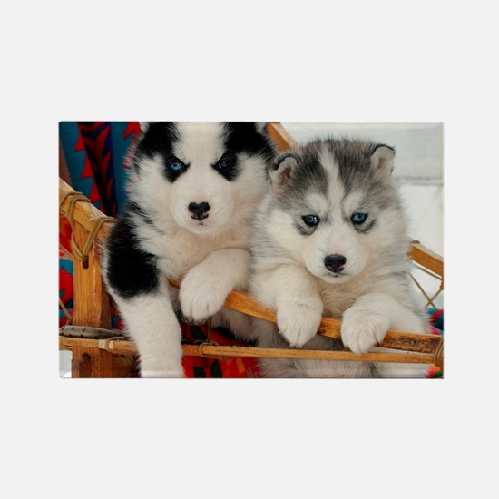 Two Husky puppies Magnets