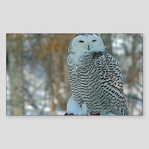 Snowy Owl 01 Sticker