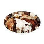 A Herd of Cattle Oval Car Magnet