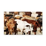 A Herd of Cattle Rectangle Car Magnet