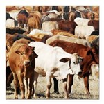 A Herd of Cattle Square Car Magnet 3
