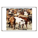 A Herd of Cattle Banner