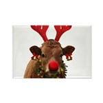 Christmas Cow Rectangle Magnet (10 pack)