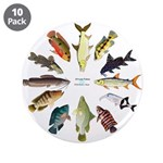 African Fishes Clock I 3.5
