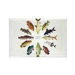 African Fishes Clock I Magnets