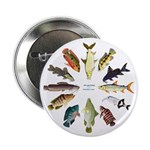 African Fishes Clock I 2.25