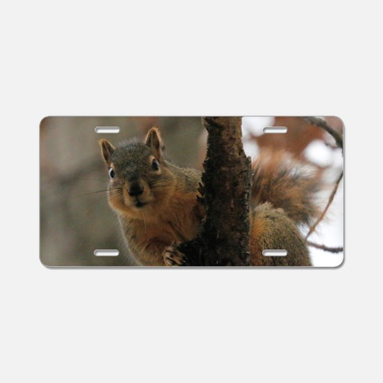Cute Rodents Aluminum License Plate