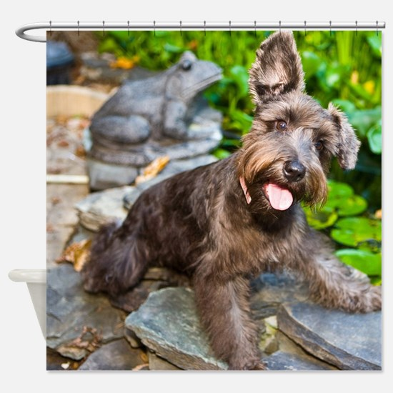 Adorable Liver Color Schnauzer Shower Curtain