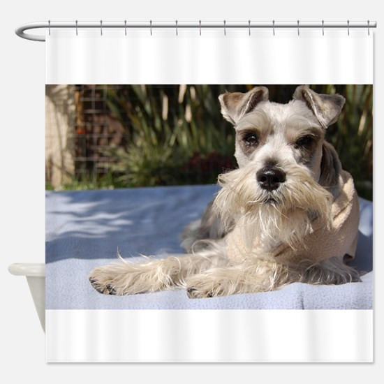 Handsome Mini Schnauzer Shower Curtain